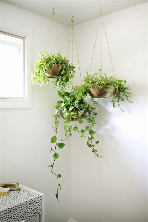 indoor garden idea hang your plants from the ceiling