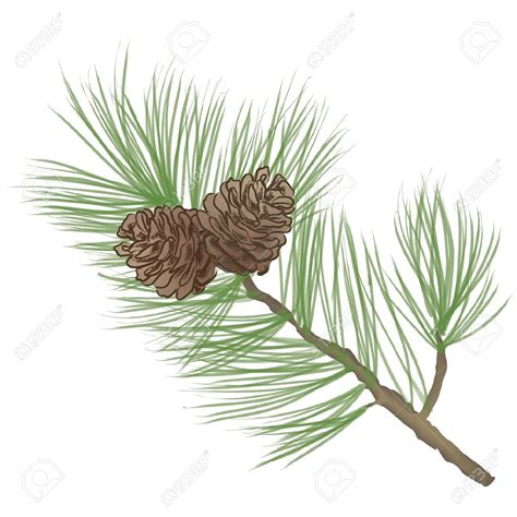 pine branch clip art 57
