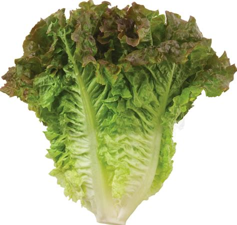 types of lettuce lettuce types nutrition facts calories carbs health benefits