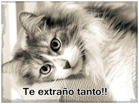 imagenes con frases bonitas de gatitos imagenes de gatitos tiernos con frases lindas archivos