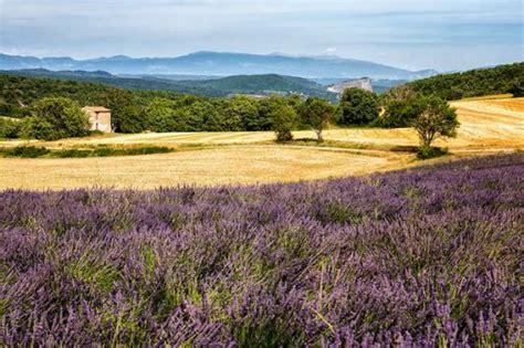 Lavendelfelder Provence by Die Prachtvollsten Lavendelfelder In S 252 Dfrankreich