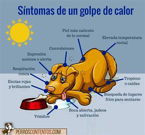 imagenes animales con calor golpes de calor clinica veterinaria dr palmer