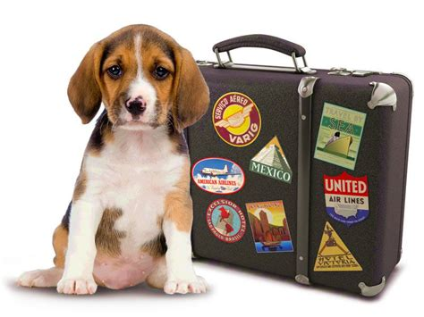 Vacation Pet Pet Pet Product by Vacation Frendly Hotel For Your Pets Top Reviews