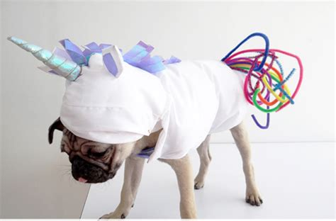 fun halloween costume ideas   pup pedigree