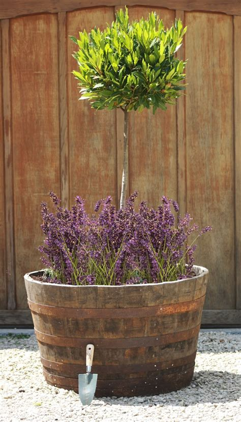 extra large rustic  whiskey barrel oak planter dcm