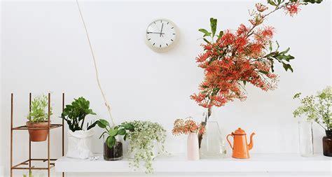 t d c interior styling indoor plants 9 indoor plants that won t die on you blog hipvan