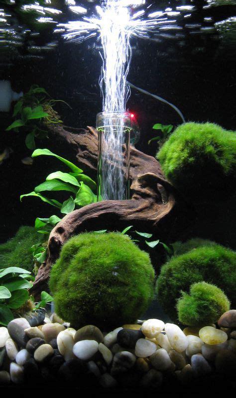aquascape tank for sale 10 best ideas about aquascaping on pinterest aquarium