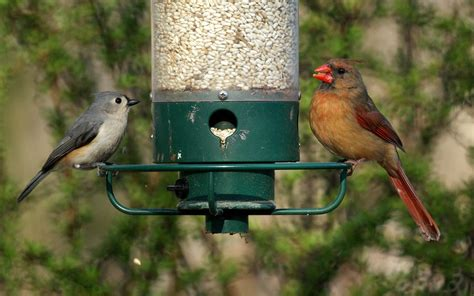 miketes common backyard birds in new jersey in the spring
