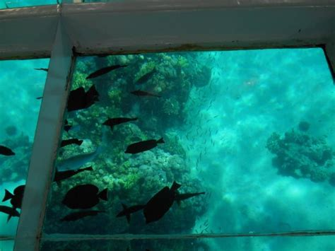 glass bottom boat uk glass boat trip picture of glass bottom boat cruise and
