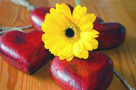 yellow flower  red heart  stock photo public