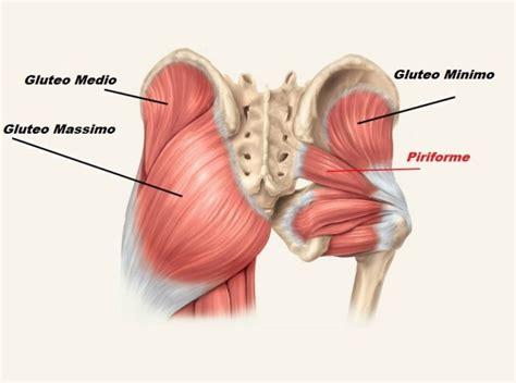 muscoli sedere l importanza dei glutei nel nuoto swim4life magazine
