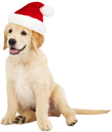 cute dog with santa hat png clipart best web clipart