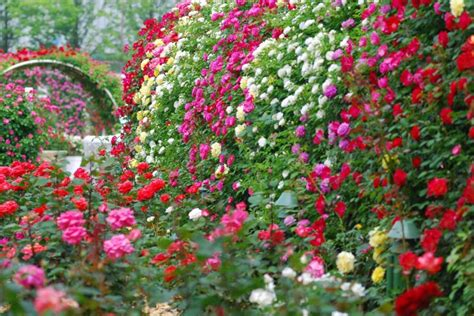 Garden Of Roses by Specialty Garden Management Neave Landscaping