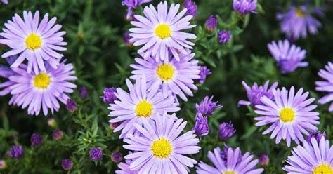 summer flowers the most popular blooms for every month 9 best summer flowers