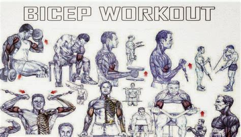 best workout for the best biceps exercises for size fitness workouts