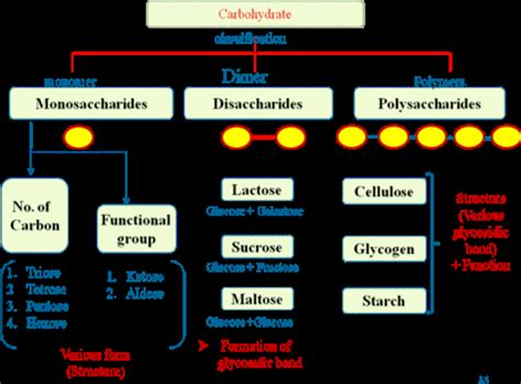 carbohydrates in xanthan gum carbs carbss carbohydrates the beginning twisteddnas