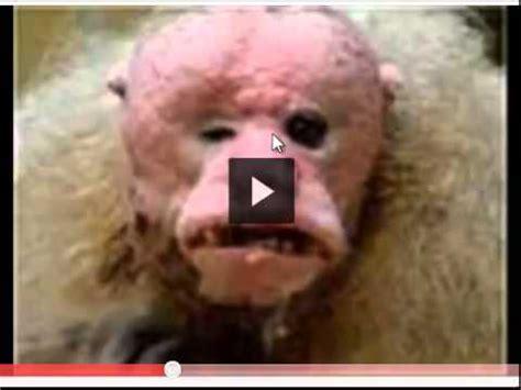 imagenes groseras de cumpleaños reportagem completa os animais mais feios e esquisitos d