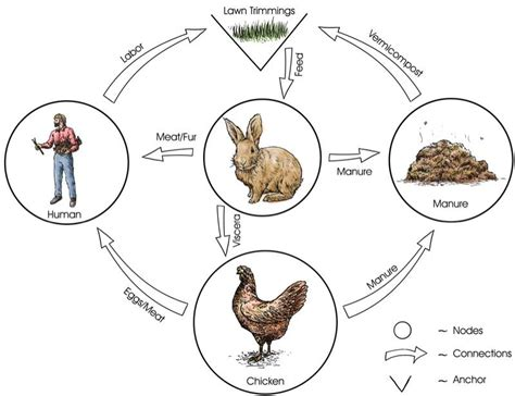 backyard food chain simple food web exles pictures to pin on pinterest