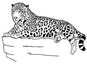 free printable cheetah coloring pages for
