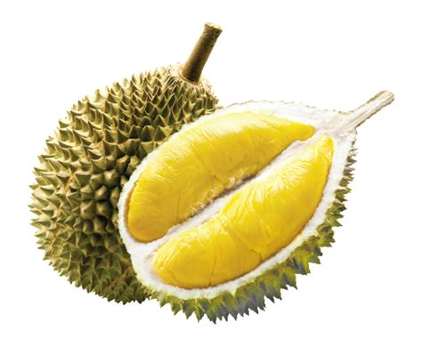 does concolor fir smell like oranges how does durian smell and taste to you quora