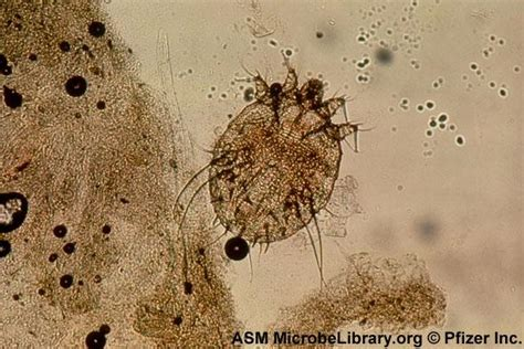 can dogs carry lice ectoparasites at globe studyblue
