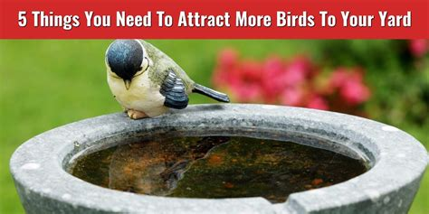 5 things you need to attract more birds to your yard