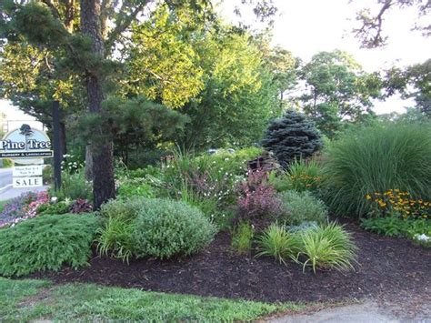 mart landscaping ideas under pine trees must see