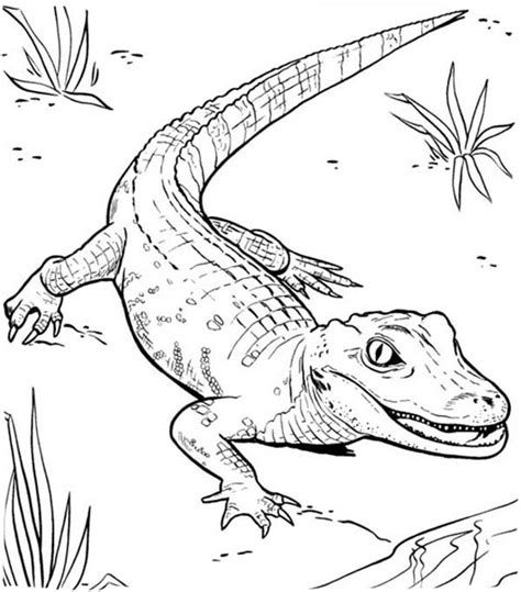 Crocodile Images To Color Small Caiman Coloring Page IugiOW  sketch template