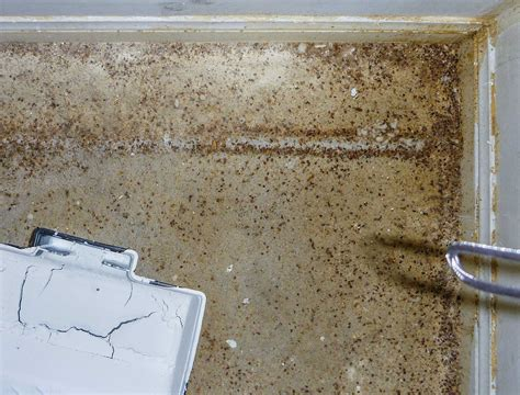 Worst Bed Bug Infestation by The Worst Of Bed Bug Infestation Pest Of