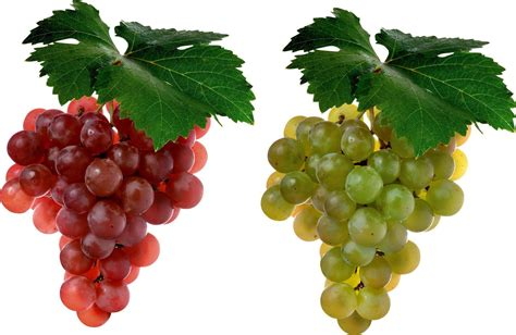 imagenes hd uvas grapes wallpapers wallpaper cave