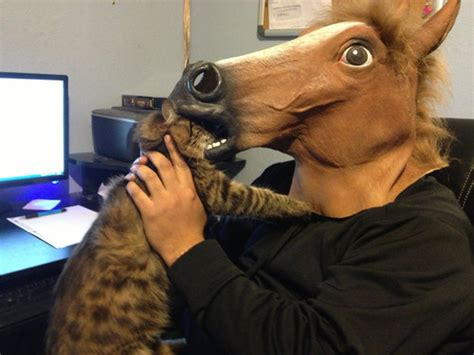 Horse Mask Meme - the 11 best ways to wear a horse mask from you re doing i