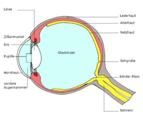 Beschriftung Des Auges by 4teachers Lehrproben Unterrichtsentw 252 Rfe Und