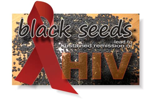how to cure hiv the black seeds nigella the