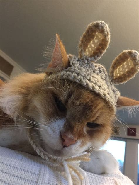 bunny ears for dogs easter bunny ears hat for dogs or cats rabbit ears costume beds and costumes