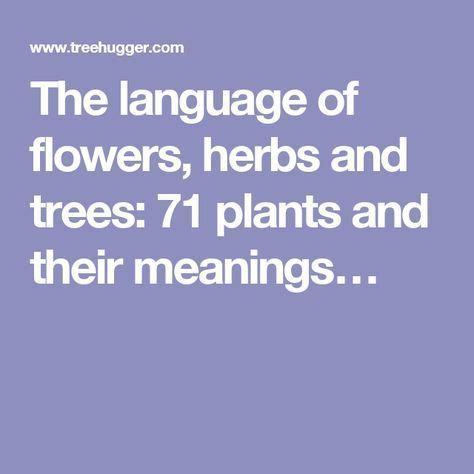 trees and their meanings best 25 flowers and their meanings ideas on pinterest