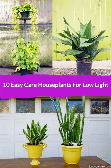 houseplants for low light 10 easy care houseplants for low light