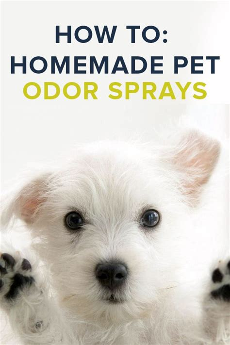 homemade dog shoo for good smell 70 best diy images on pinterest bricolage cat toys and