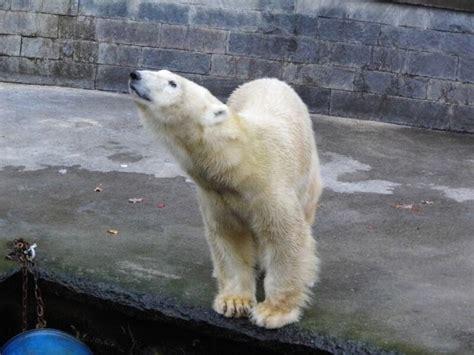 zoologischer garten vs tierpark forum 220 bersicht rostock zoologischer garten 187 gr 252 223 e