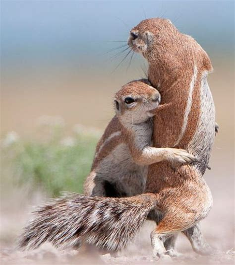 funny animal pictures funny image gallery really funny animal pictures