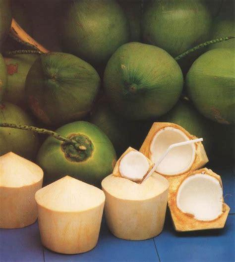 Kepala Muda Murni apa aja boleh yang penting okeh sejuta khasiat buah kelapa