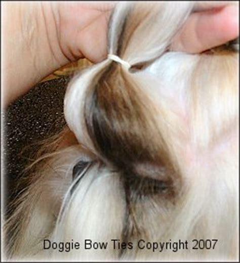 junique shih tzu shih tzu top knot breeds picture