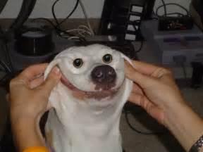 Funniest Dog Faces Ever Los Pollos