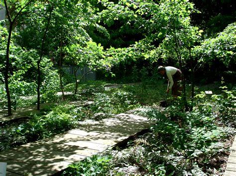Garten Pflanzen Schatten by Schattengarten Atelier Le Balto Le Site