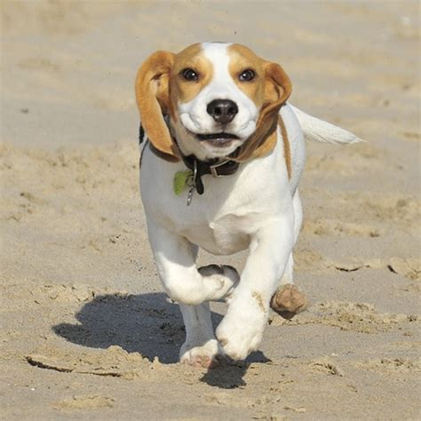 dog breeds  children pet care hospital india