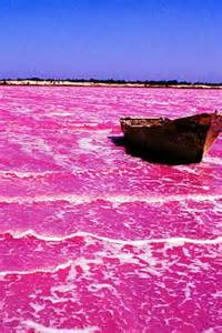 pink lake australia 25 best ideas about pink lake australia on pinterest