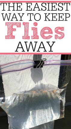 how to keep flies away from backyard set up an outdoor changing area if you have a pool in the