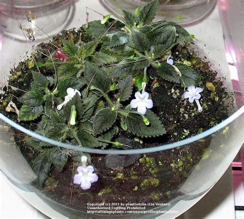 floor protectors for plants 100 floor protectors for plants native plants metro