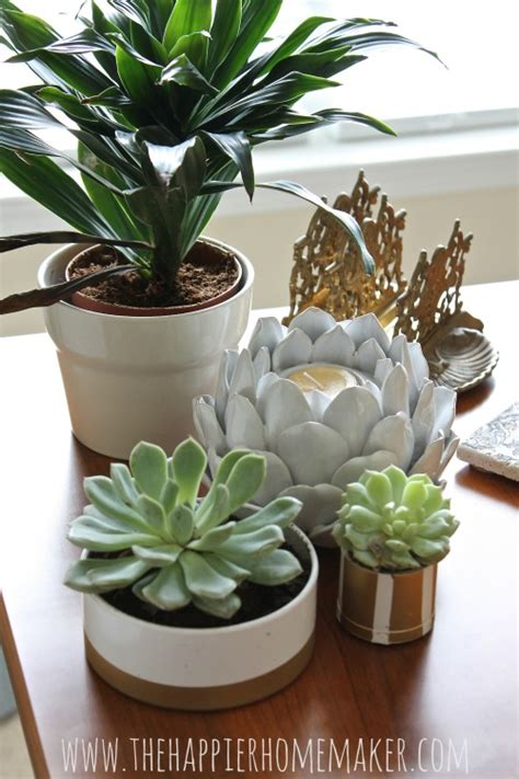succulent planters diy pvc pipe succulent planters the happier homemaker