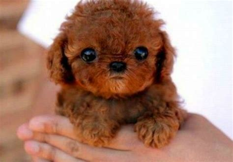imagenes de animales japoneses animales que te har 225 n morir de amor todo mascotas