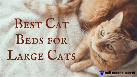 best cat beds these are the best cat beds for large cats pet lovers world